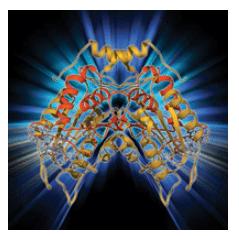 Molecular Model Periodontal Maintenance