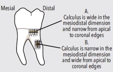 first-molar-teeth-fig-11