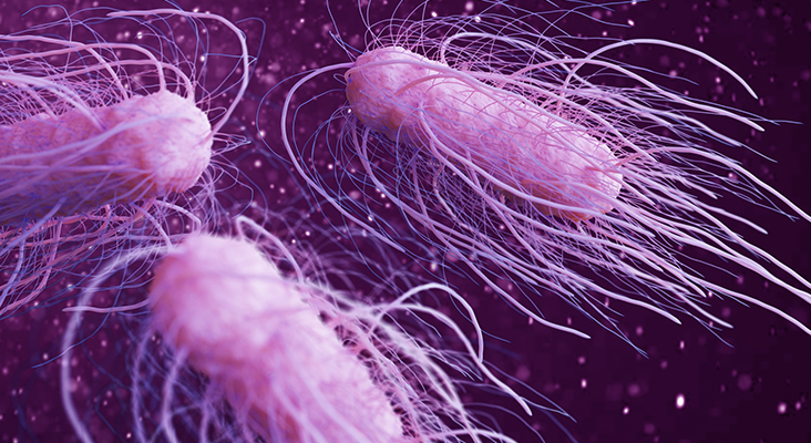 salmonella bacteria 3d illustration
