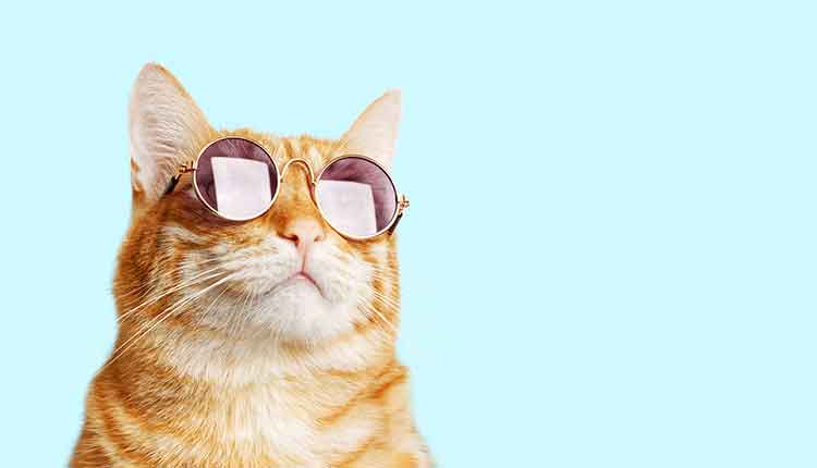 Closeup portrait of funny ginger cat wearing sunglasses isolated on light cyan