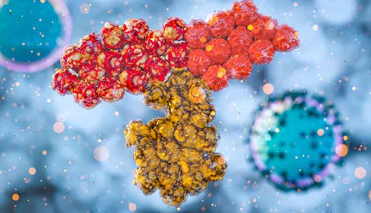 antibody SARS COV-2 immune response, immunotherapy concept with immunoglobulins, antiviral response antibody covid-19