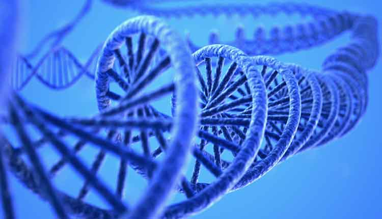 computer generated three dimensional rendering of DNA